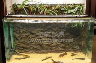 弱光 LED 水草栽培实验(03):鹿沼土的设缸过程与化学特性