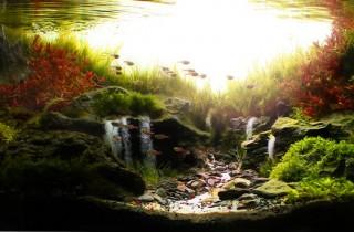 水族造景分析:山谷里的日出