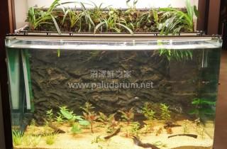 弱光 LED 水草栽培实验(04):一个月成长纪录