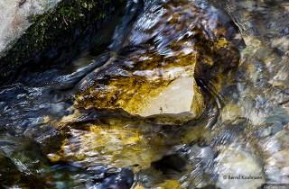 池塘中的藻類(12):矽藻