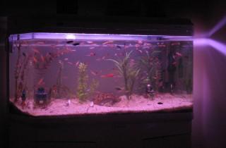 魚友該怎樣選購水族箱和魚缸