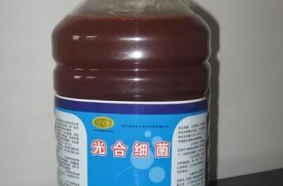 常見硝化細菌的分類、介紹及用法