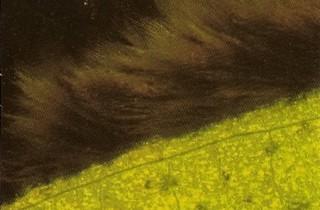 藻類防治入門(終):黑毛藻