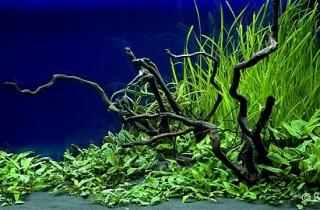 2008 年德國「水草缸之藝術」水草造景大賽(上)