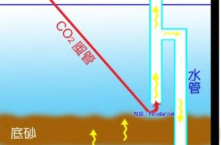 底床水流對水草成長的影響