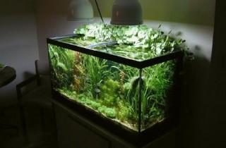 以降低光照限制水草和藻類的成長