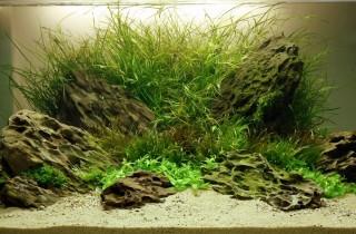 2012 年德國「水草缸之藝術」水草造景大賽成績