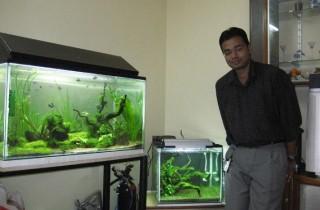 觀賞魚工業:從孵化場到水族館