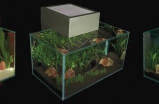 擴展水族造景的無限可能:Fluval Edge 水族缸