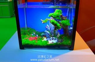 2013年台灣國際觀賞魚博覽會之水草造景比賽成績