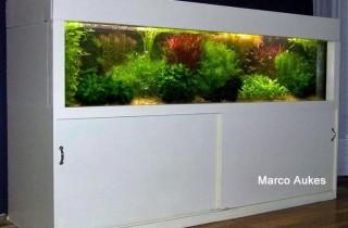 荷蘭式水族造景速成班(下):硬件設備與佈景手法