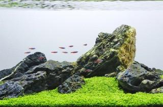 用一盆水草搞定石組造景的水族造景分析