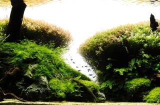 水族造景分析:森林